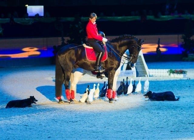 Anne Krüger, eine der bekanntesten Tiertrainerinnen ist bei den Mevisto Amadeus Horse Indoors zu Gast © Nini Schäbel