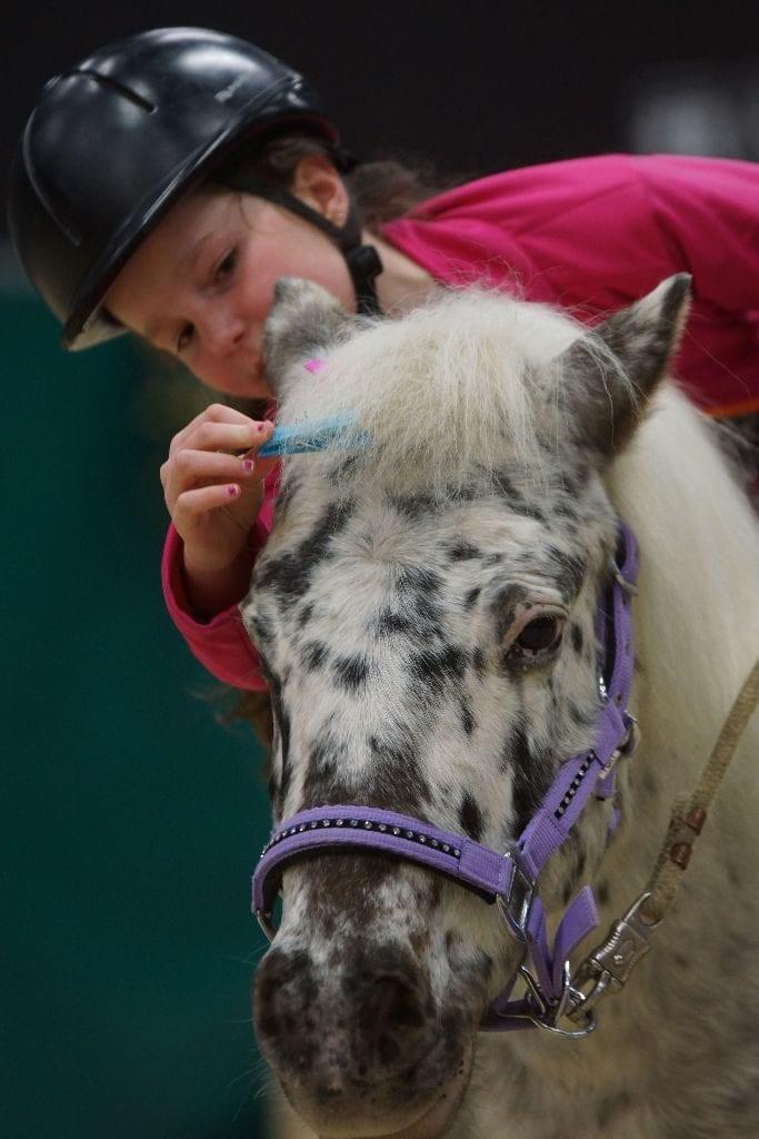 Die jüngsten Gäste können nicht nur den Großen im Sattel zusehen, sondern auch selbst einmal aufs Pony steigen. © Salzburg CityGuide