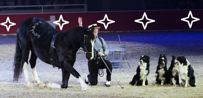 Willi Schauberger und sein tierisches Quintett sorgen in der Show bei der Mevisto Amadeus Horse Indoors für entzückende Momente. © Willi Schauberger
