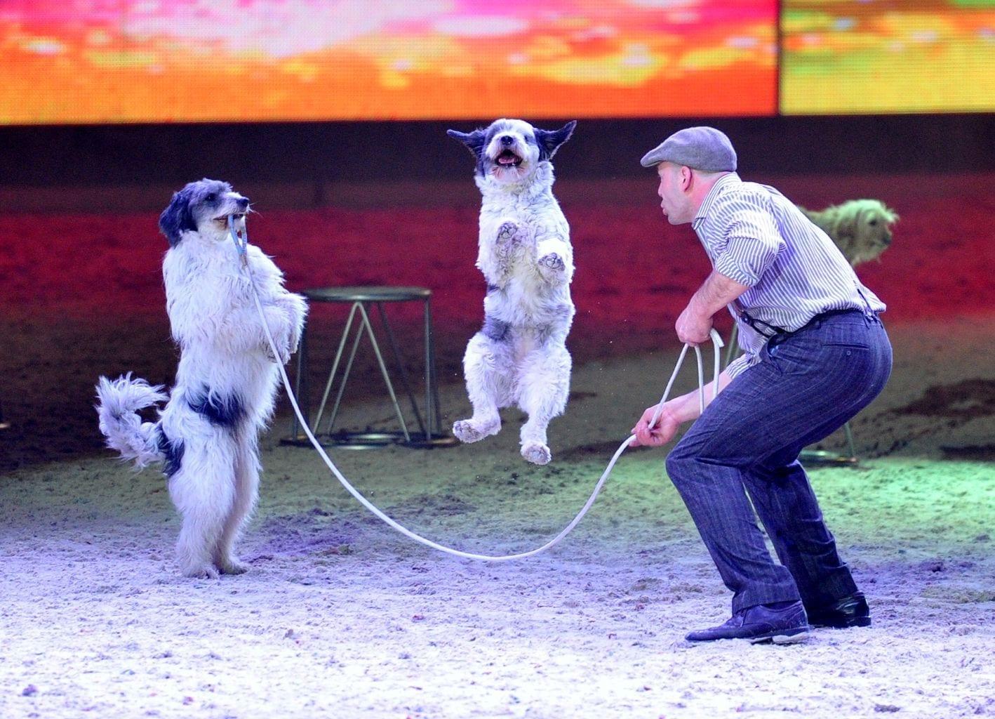 Wolfgang Lauenburger und seine hochintelligenten Hunde werden sicherlich ein Höhepunkt der Amadeus Horse Indoors Showtime 2017 sein. © Nini Schäbel