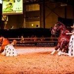 Pferdesport, Shopping & Show – die Amadeus Horse Indoors 2017 versprechen ein buntes Prorgamm für die ganze Familie. © Antoine Bassaler