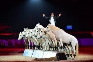 Mevisto Amadeus Horse Indoors Pferdeshow