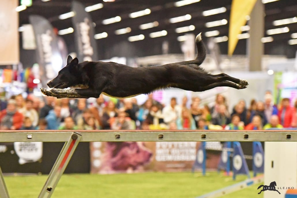Der THE GOODSTUFF Amadeus Agility Worldcup ist ein Publikumsmagnet bei der Amadeus Horse Indoors. © Sibil Slejko