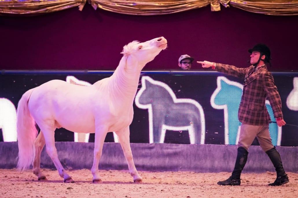 Nur ein Ticket für Messe, Sport & Show bei der Amadeus Horse Indoors 2019. von 5.-8. Dezember in Salzburg. © Daniel Kaiser